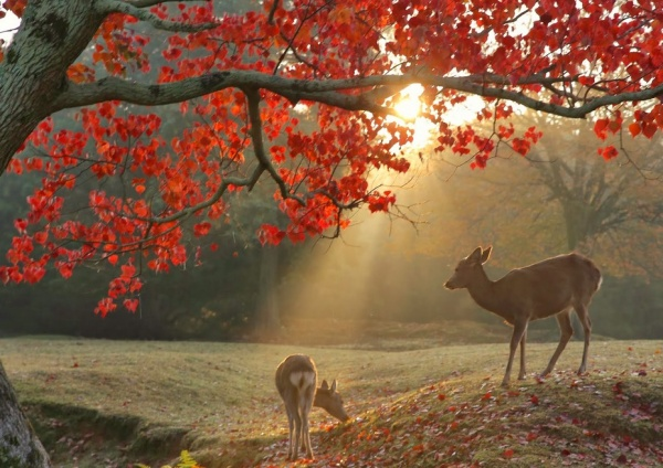 「秋の厳島神社=鹿」と[1]